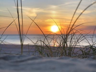 strand, strandhafer, sonnenuntergang am meer