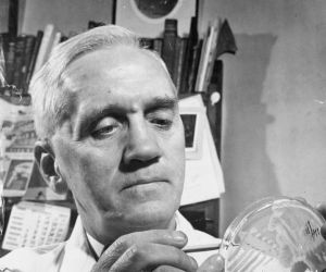 alexander-fleming-investigates-the-effect-of-penicillin-on-bacterial-growth